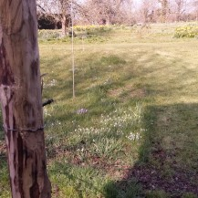 A view of the Orchard from a gap in the fence!